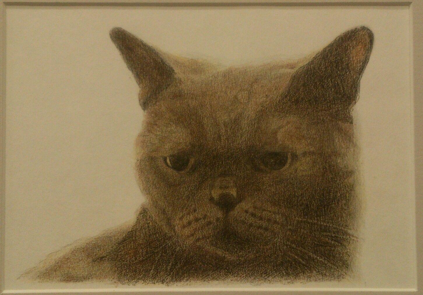 colorpencil,cat