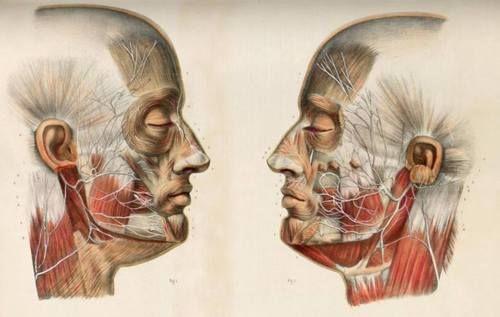 Variations of the facial nerve by Nicolas Henri Jacob | FASHIONISM ...