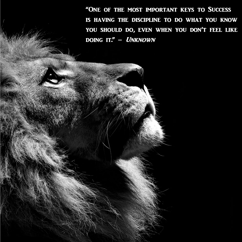 Quote Of The Day Black And White Lion Lion Profile Lion Wallpaper