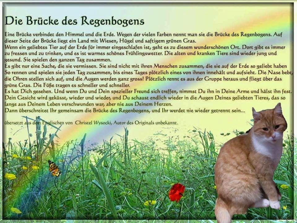 Pin Von Nicole Rinke Auf Hundi Regenbogenbrucken Hund