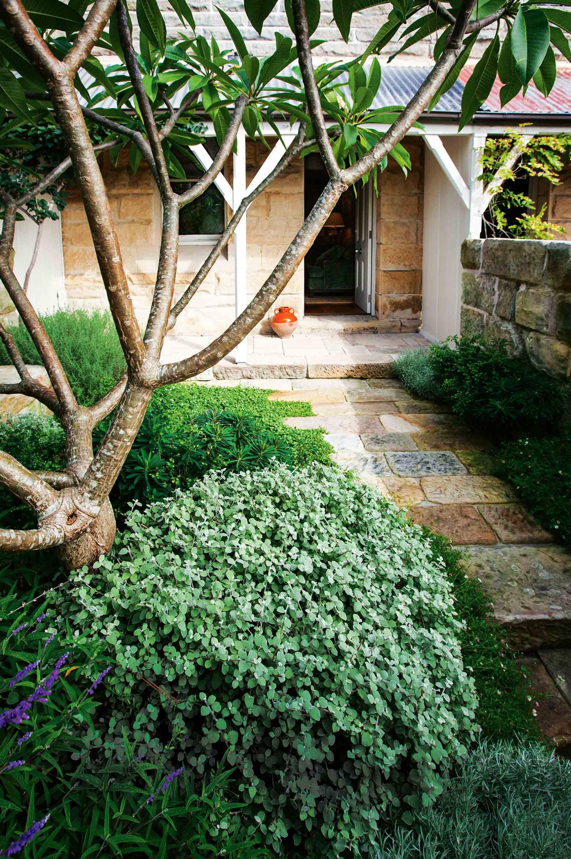 Front-garden-sandstone-house-frangipani-tree-feb15