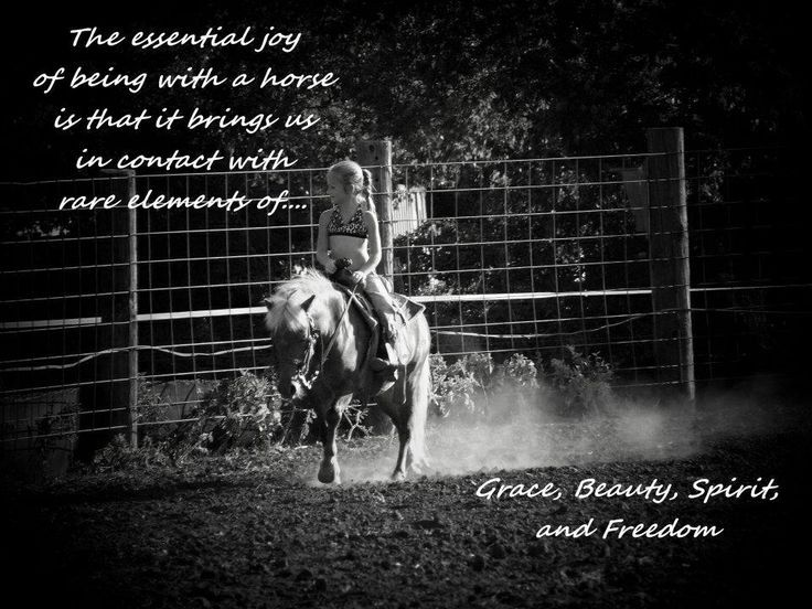 Horse Pictures With Quotes Like