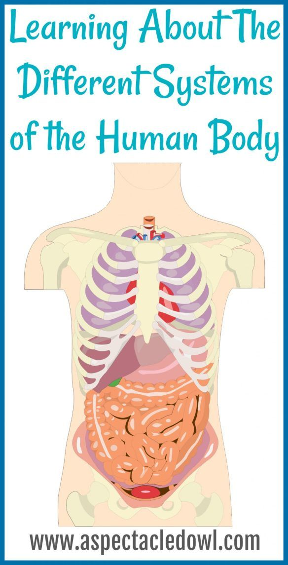 Learning About The Different Systems Of The Human Body Human Body