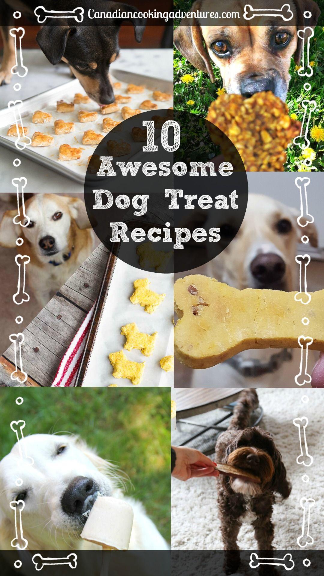10 awesome dog treat recipes dog treat recipes dog