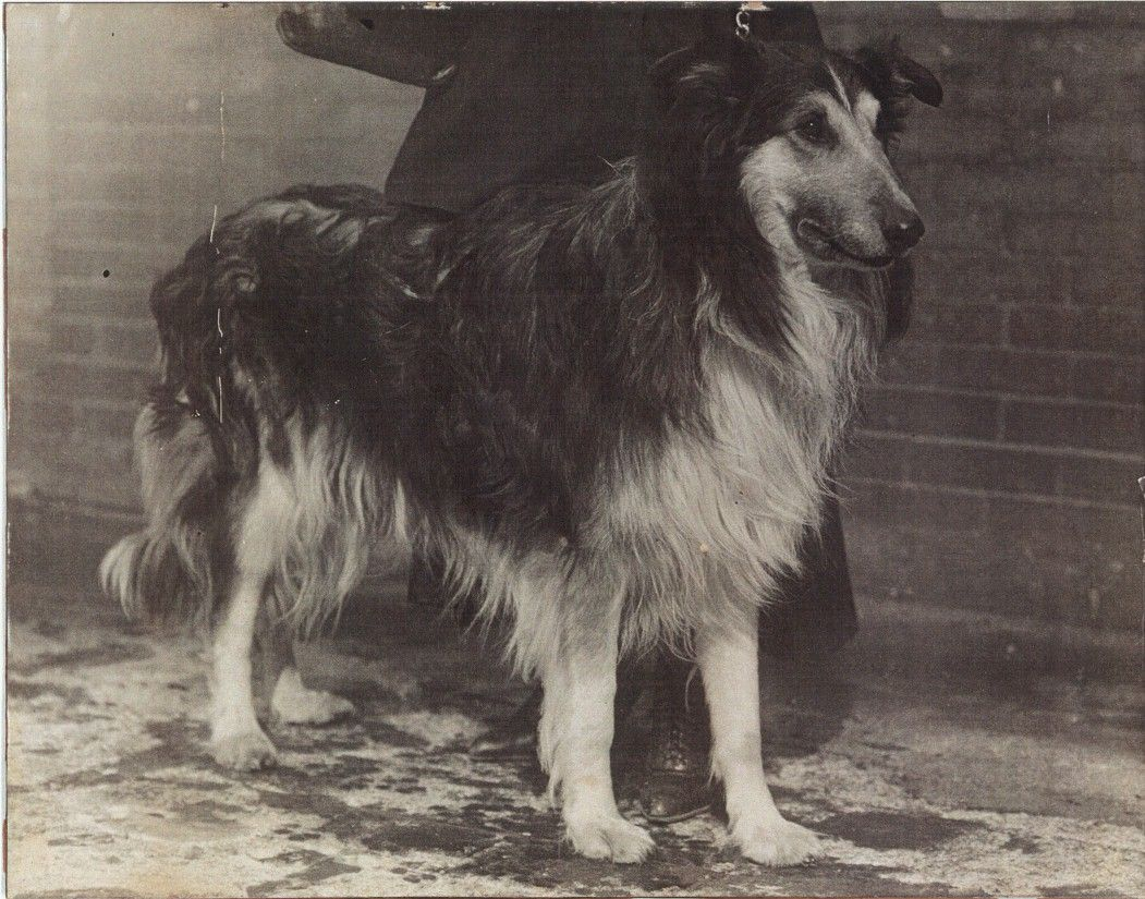 Bruce Sunnybank Collies Albert Payson Terhune Rough Collie