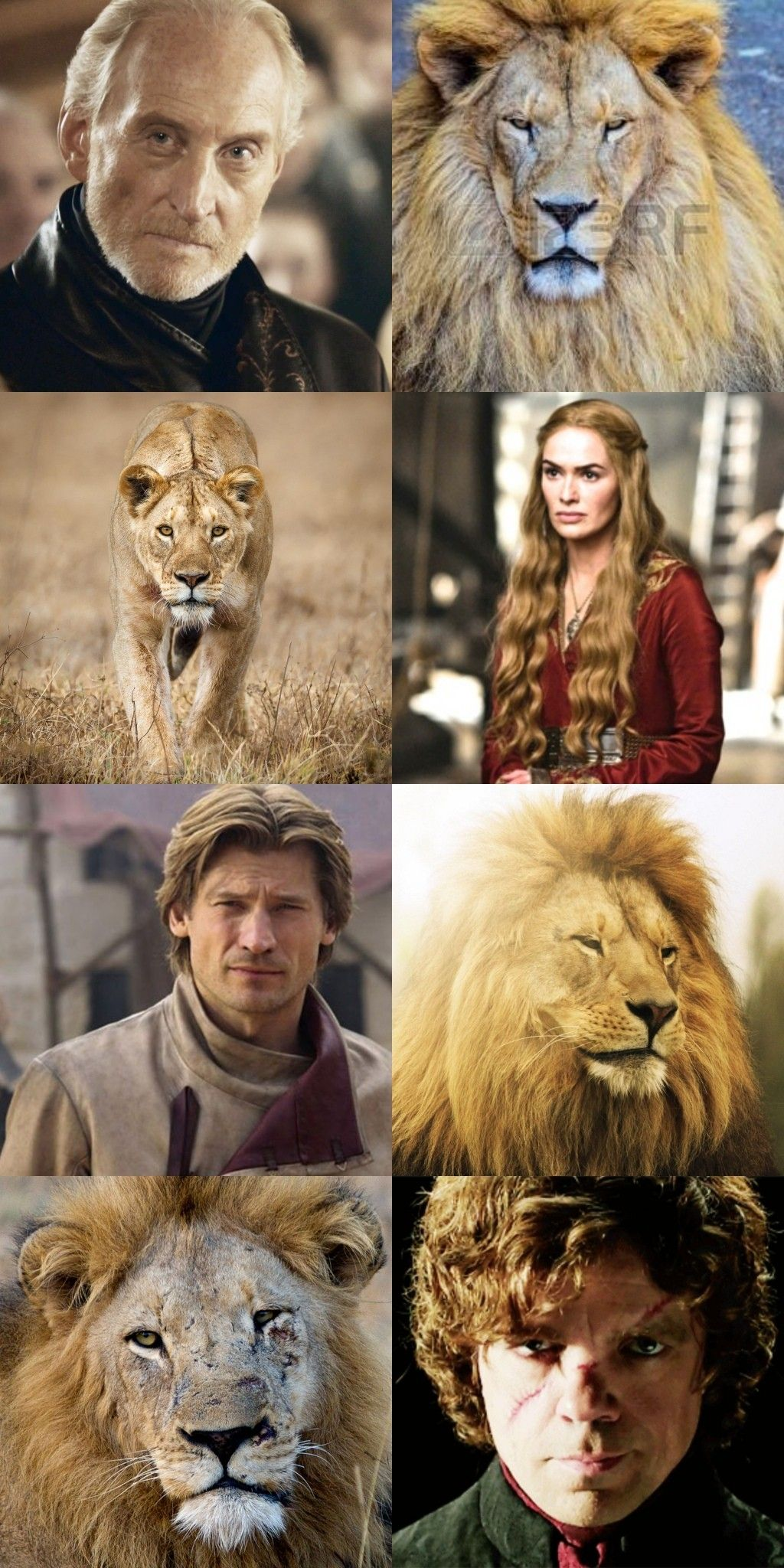 WINTER IS COMING LION LADIES T SHIRT TEE DAENERYS GAME KHALEESI THRONE JON SNOW