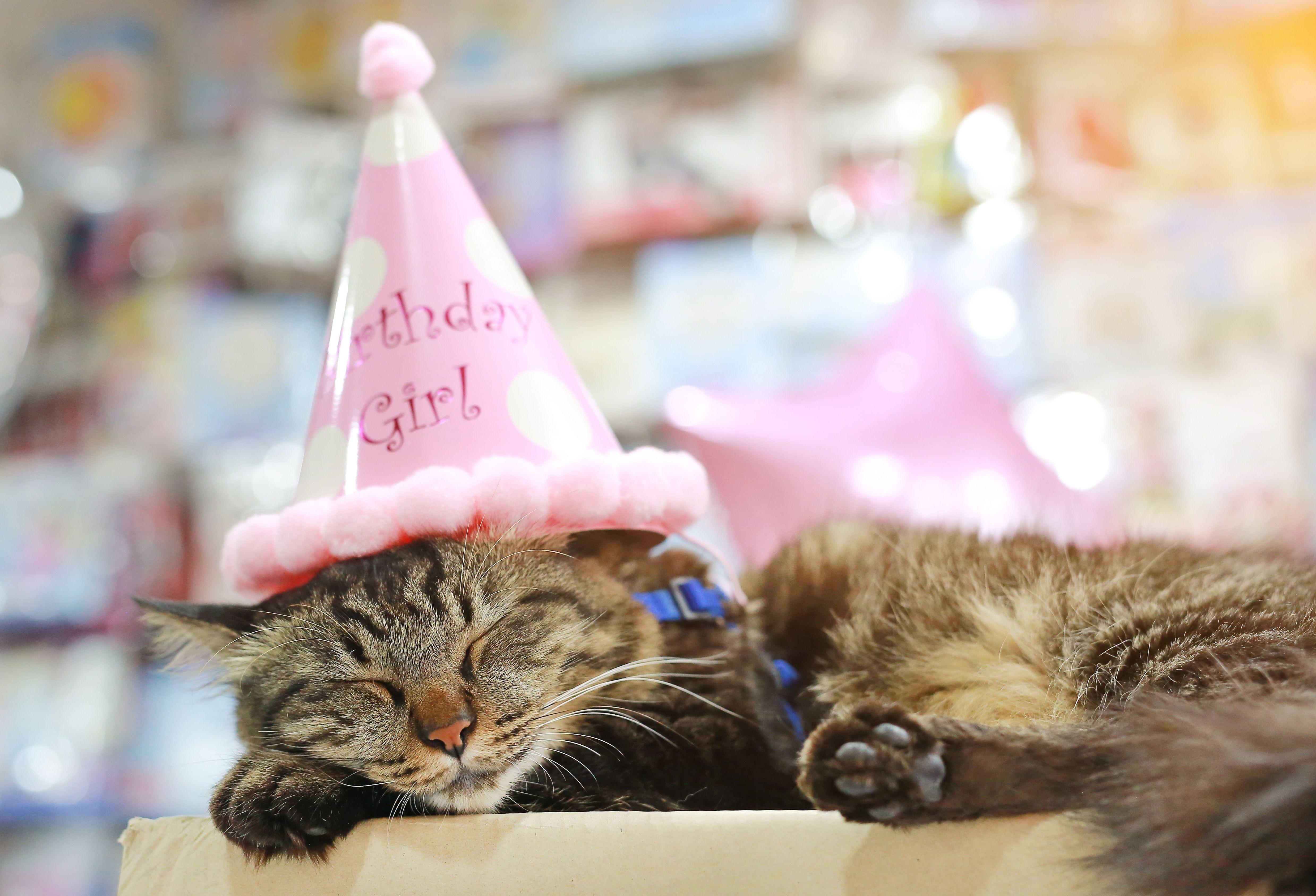 Birthday Cat: Hosting Your Cat's Birthday in Style - Kitty ...