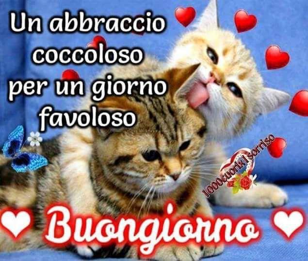 Pin su italiano la mia lingua for Buongiorno con gattini