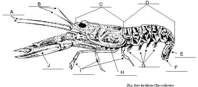 Crayfish Exterior Moose Art Animals Crayfish