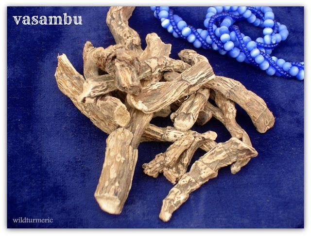 10 Top Medicinal Uses Of Acorus Calamus Vacha Calamus Root Sweet Flag Vyambu Wildturmeric Herbs For Health Health Acorus