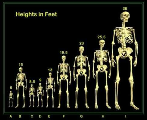 Various Nephilim Giant Heights Nephilim Giants Human Giant Giant Skeleton