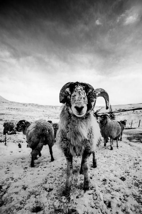 Daily Dozen For Feb 2 2016 Photos National Geographic Your Shot