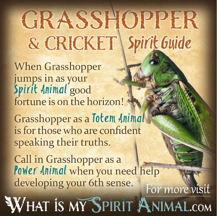 Insect Symbolism Meaning Spirit Totem Power Animal Animal Totem Spirit Guides Spirit Animal Totem Spirit Animal Meaning