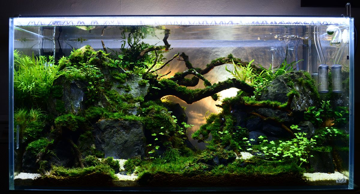 Low tech shrimp soon to be home to her rcs low light for Low maintenance fish tank