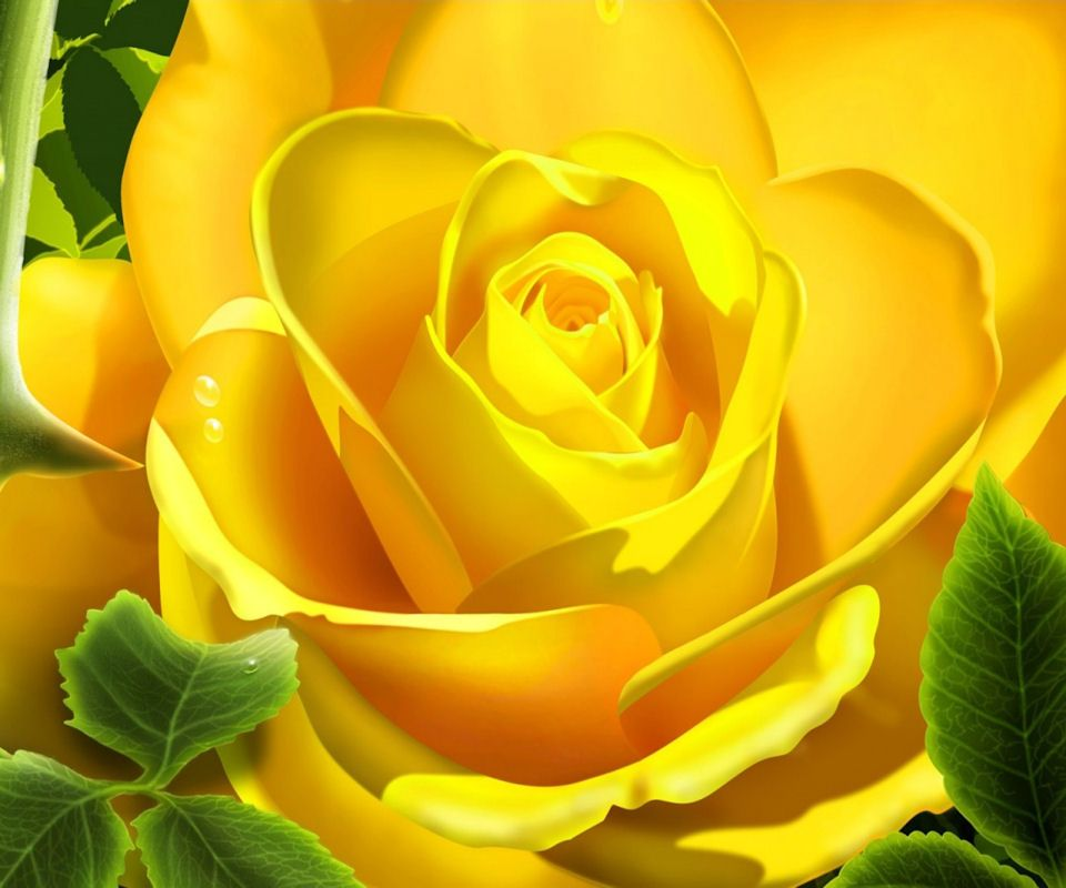 Hd Yellow Flower Android Wallpapers Rose Flower Wallpaper Yellow Roses Rose Wallpaper