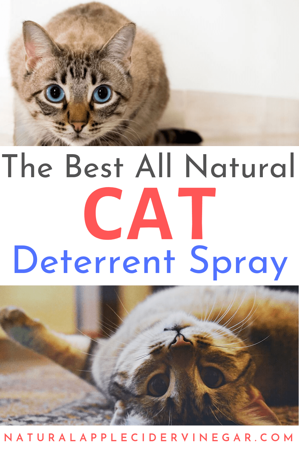 The Best All Natural Cat Deterrent Spray Recipe All Natura In