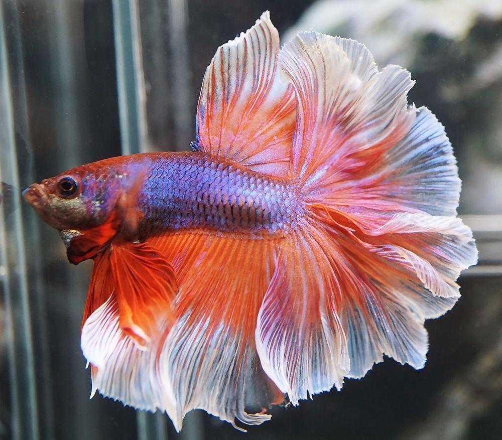 Mon aquarium 84cedb8ee3cbe2b15caf1e9aeb3f1650