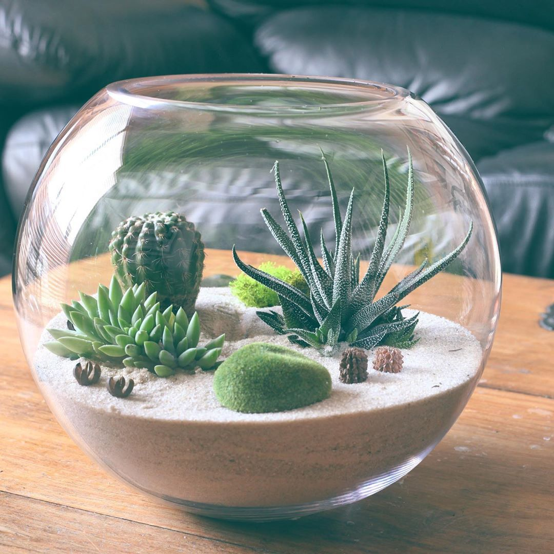 30 Indoor Plant Decor Ideas is part of Plant decor indoor, Succulent terrarium, Succulents indoor, Plant decor, Plants, Succulents indoor containers - 30 original Indoor Plant Decor Ideas  Find unique and fun ways to display your houseplant collection in your home    just like interior designers do!