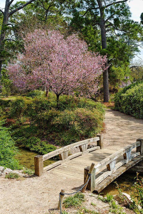 Japanese Garden Hermann Park Houston Cherry Blossom   Google Search