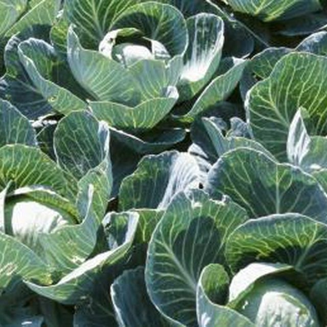 Find Out Which Vegetables Grow Best In Your Ohio Garden.