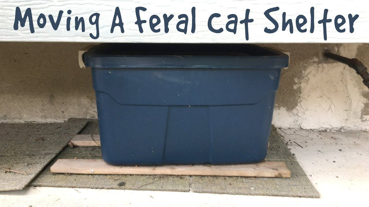 Moving A Feral Cat Shelter Question And Answer Feral
