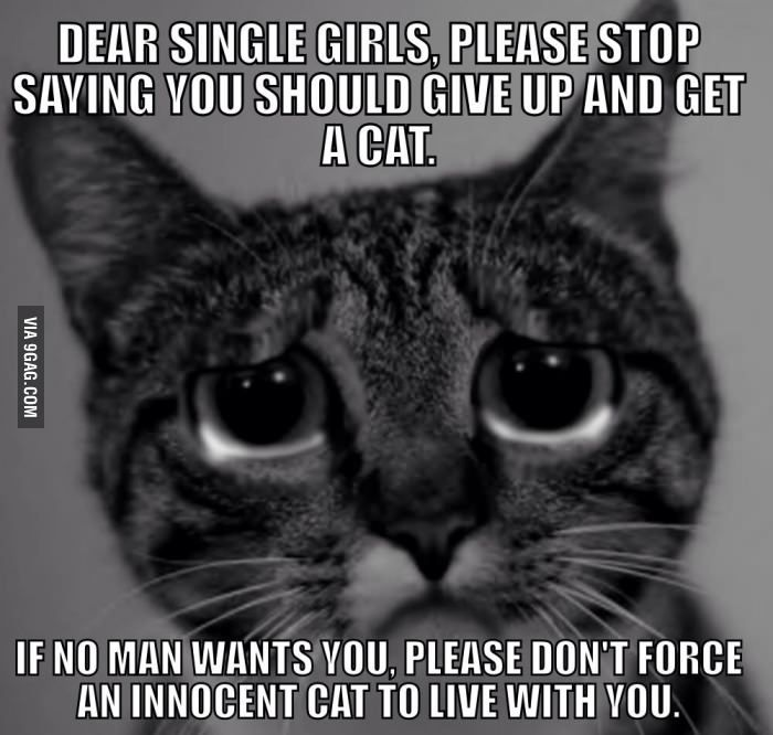 To All The Single Ladies Tgif Funny Funny Meme Pictures Cats