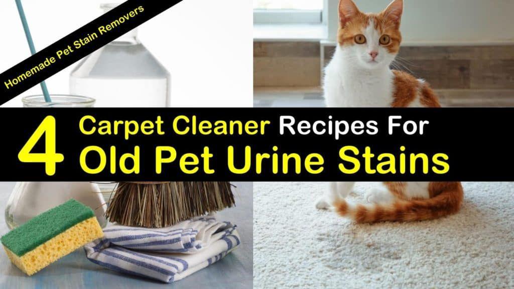 4 Best Carpet Cleaner Recipes For Old Pet Urine Stains Urine Stains Pet Urine Carpet Cleaners