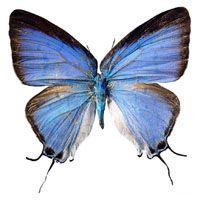 Finance Transformation butterfly