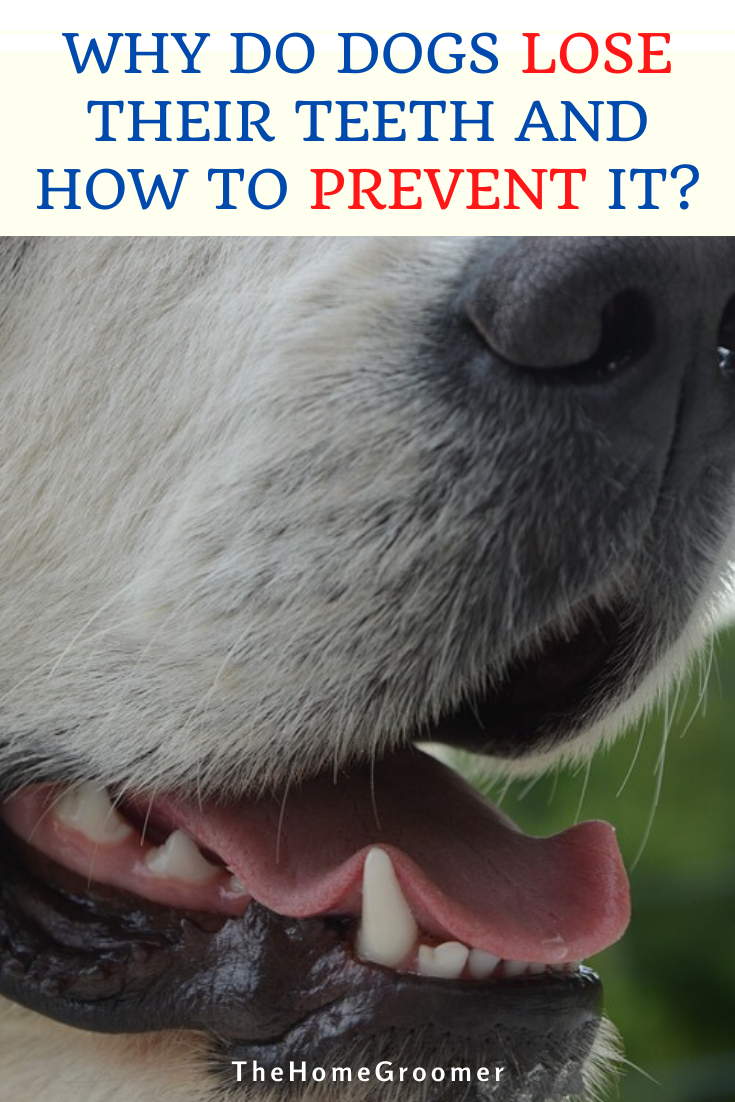 Pin On Dog Hygiene Tips