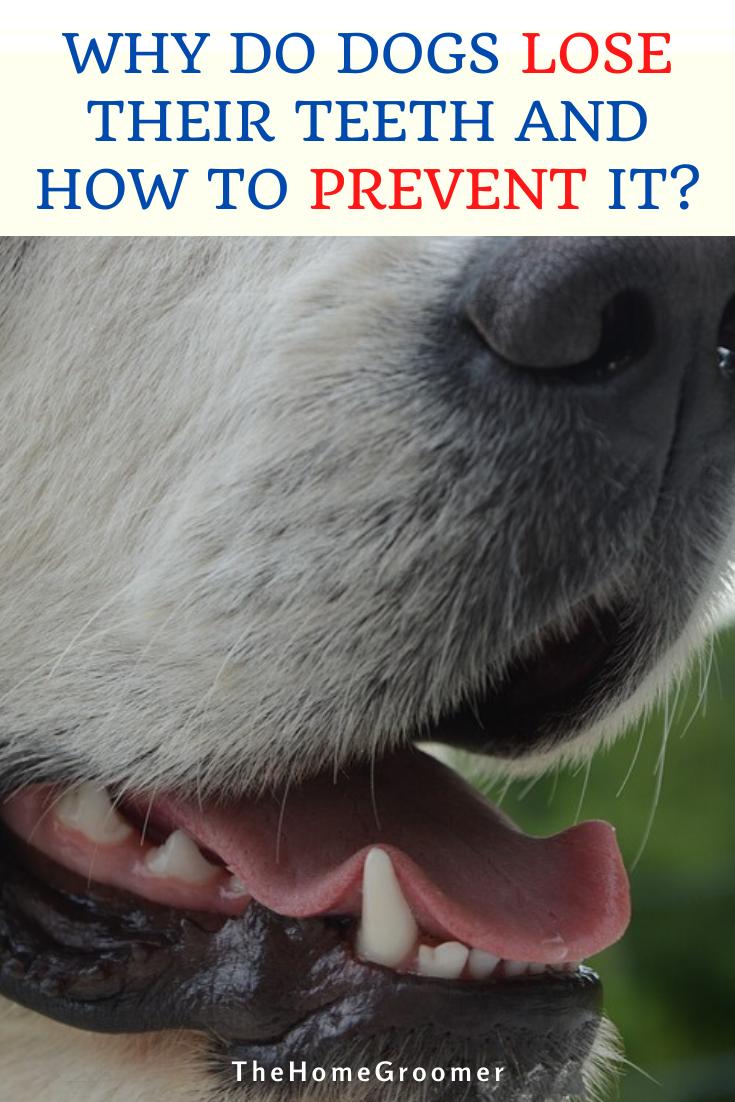 Pin On Dog Hygiene Tips