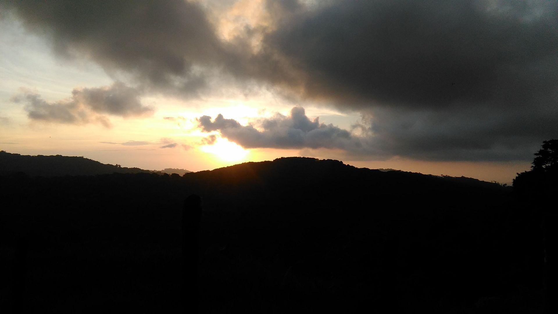 La tarde en el bosque nuboso