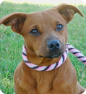 Red Bluff, CA Dachshund Mix. Meet SANDY a Dog for