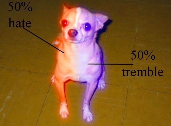 84d4c2dcbcf05a55100b9ba76e46e0f1 the anatomy of a chihuahua meme guy laugh often pinterest,Chiwawa Meme