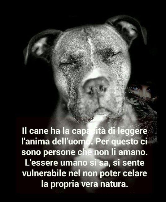 Frasi Sui Cani Pitbull.Animalisti Di Tutto Il Mondo Citazioni Sui Cani Citazioni Sugli Animali Animali