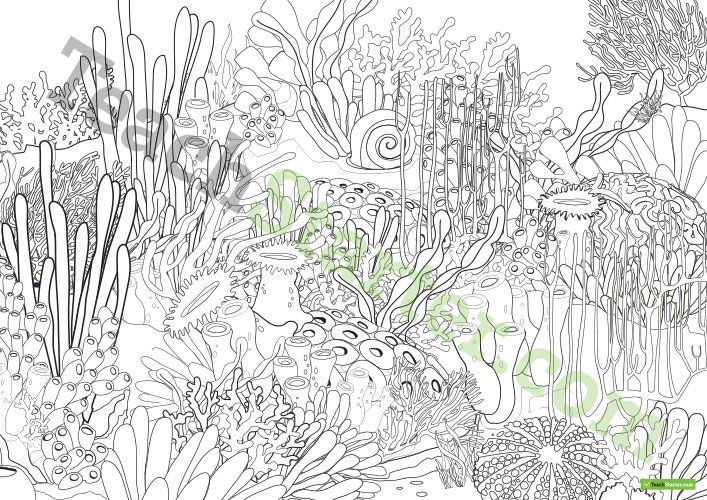 Great Barrier Reef Colouring In Activity Sheet Teaching Resource Teach Starter Teaching Great Barrier Reef Color Activities