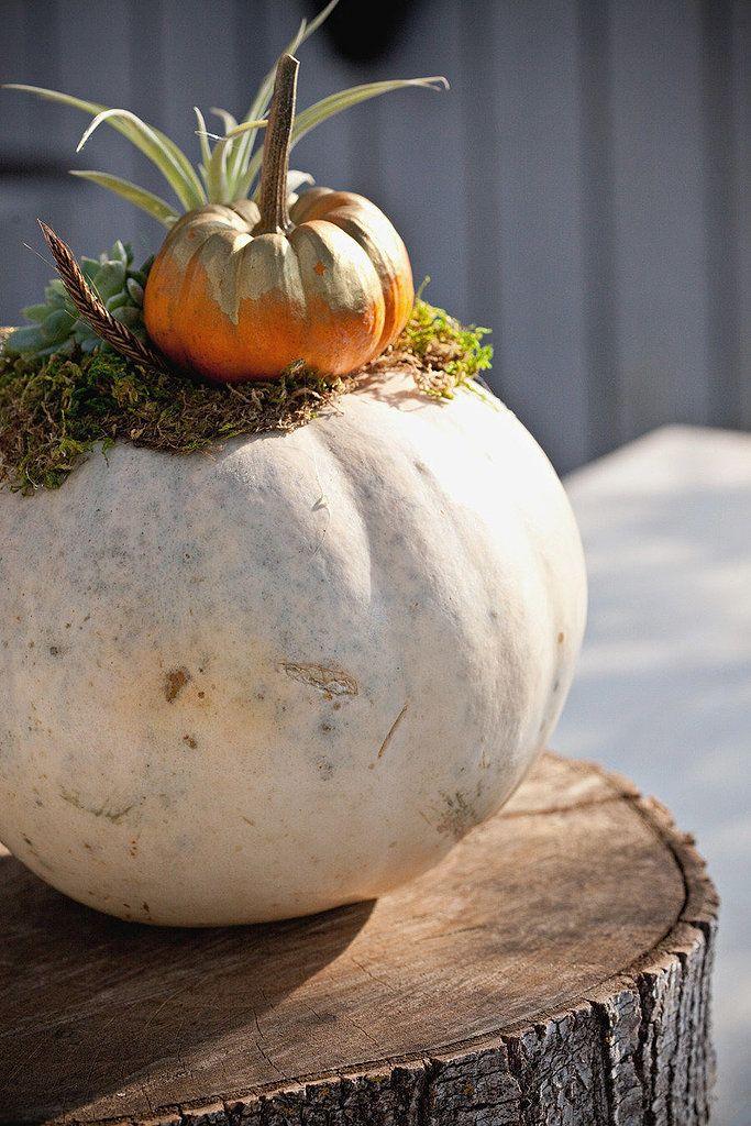 Zona Predictor Virdsam : predictor, virdsam, Pumpkin-Decorating, Ideas, Actually, Doable!, Pumpkin, Decorating,, Halloween, Decorations,