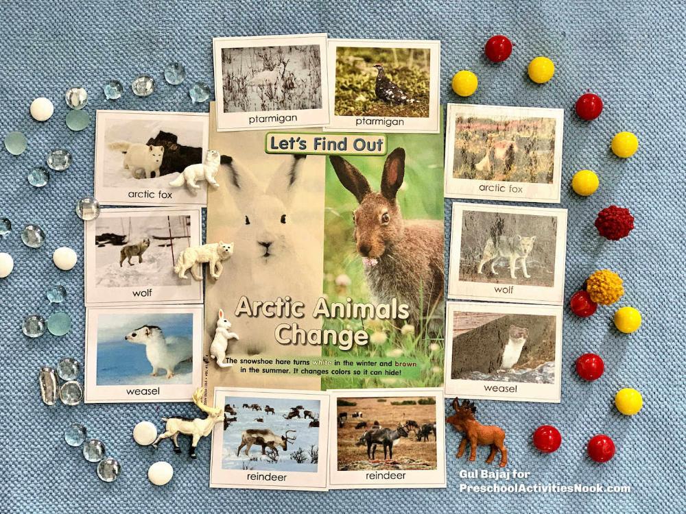 Photo of Animals in Winter Preschool Theme – Preschool Activities Nook