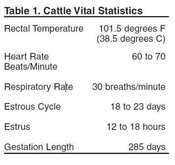 Beef Cattle Herd Health Vaccination Schedule  Cattle Health