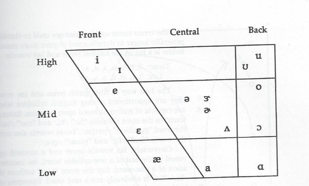 English Ipa Vowel Quadrilateral SLP General Knowledge