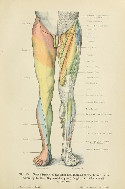 Atlas Of Applied Topographical Human Anatomy Biodiversity