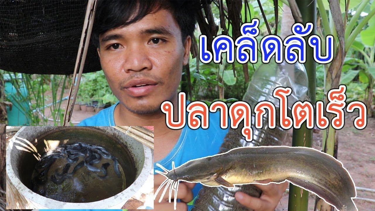 เล ยงปลาด กในบ ป น ว ธ ให อาหารปลาด กในช วง 1 เด อนแรก ให ปลาโตเร ว อ สานร มเย น Youtube กบ ก ง