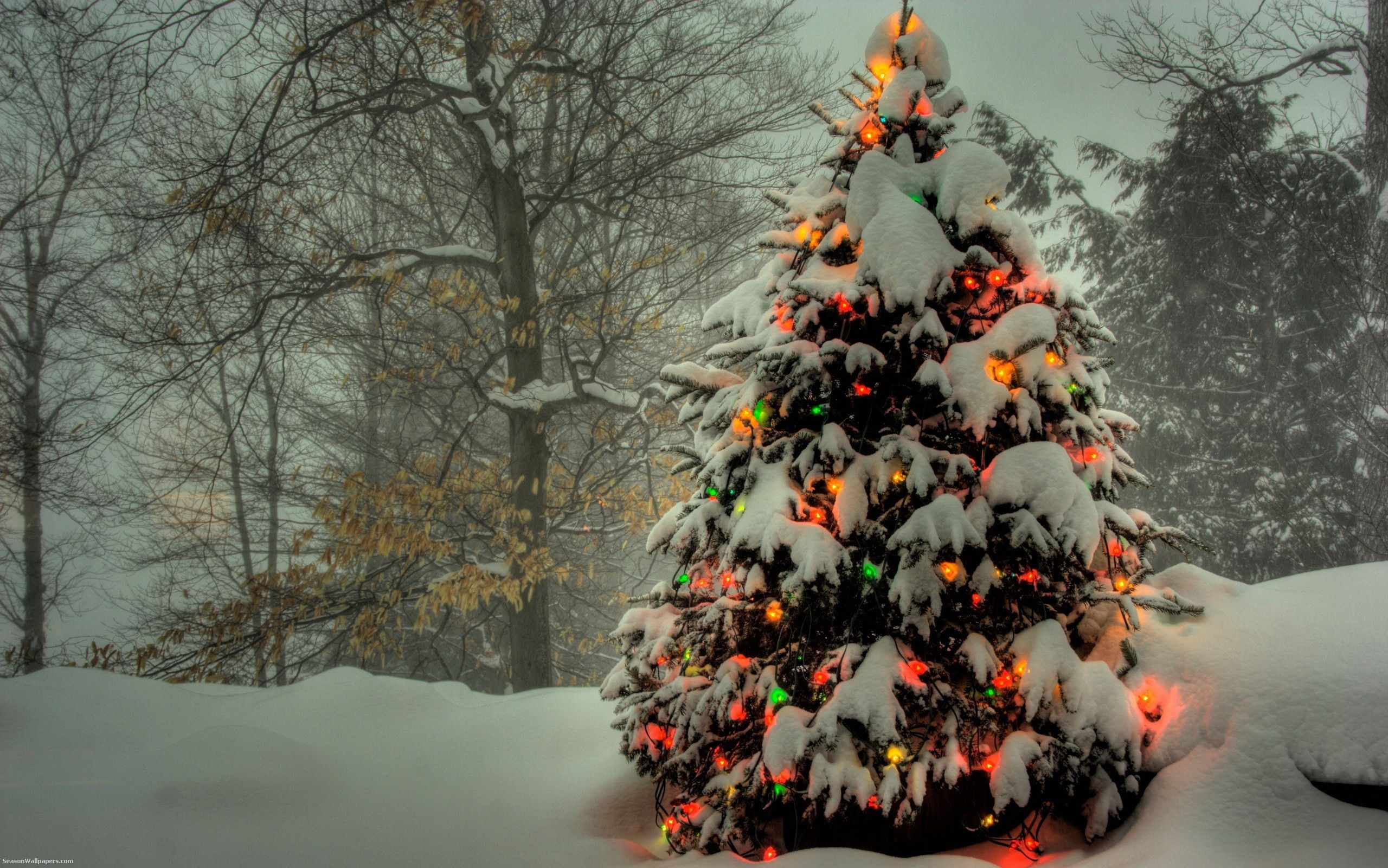 Wallpapers 2560x1600 a beautiful christmas tree covered