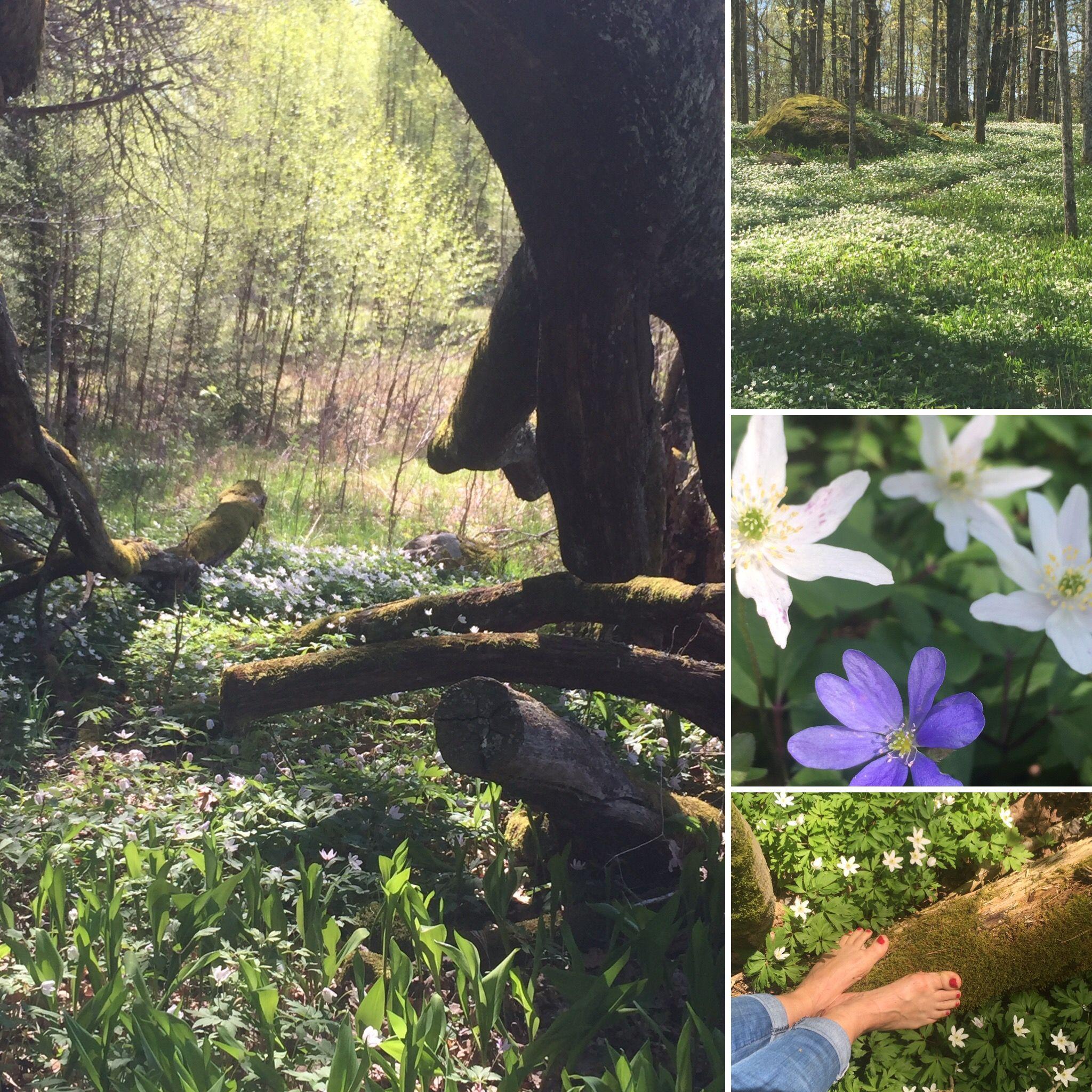 #Røerskogen#Nesodden