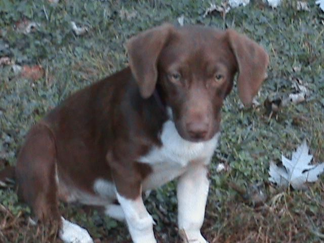 Adopt Hush Puppy On Love Your Pet Animals Dachshund Mix