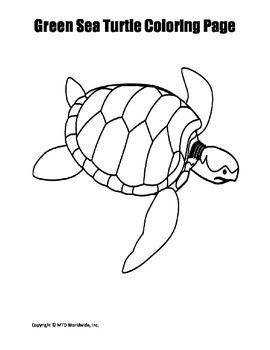 Printable Green Sea Turtle Coloring Page Worksheet Turtle