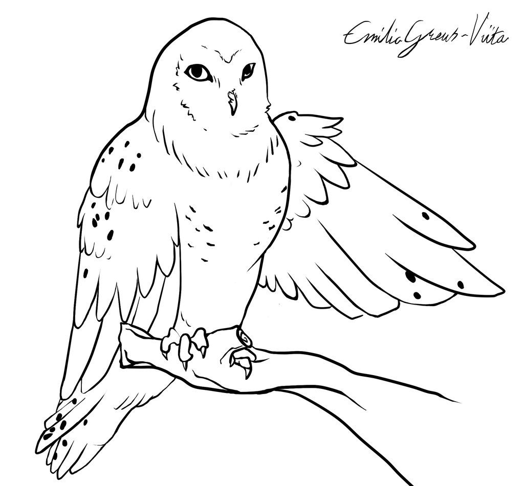 Snowy Owl Face Coloring Pages Coloring Pages Snowy Owl Color