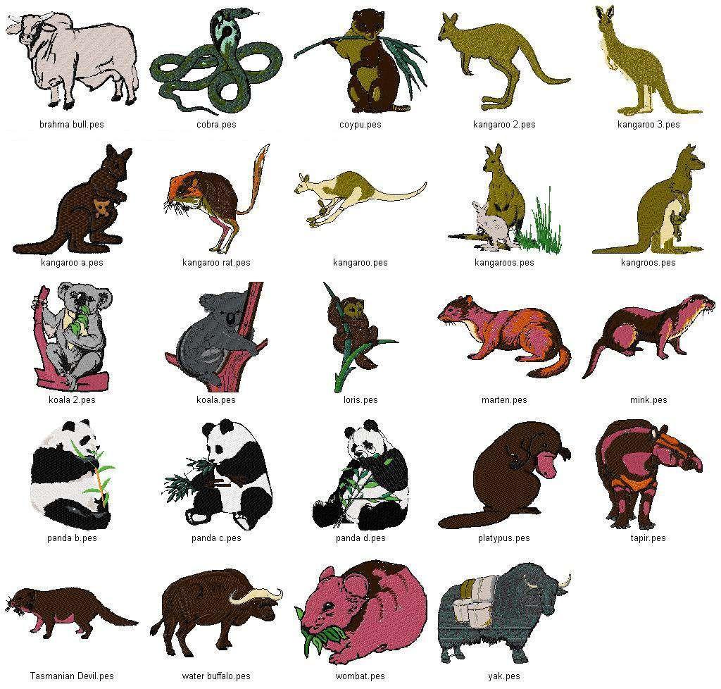 Rainforest Animals List For Kids – Kids Matttroy