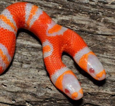This Snake Is Actually Real If You Don T Believe Me Go To