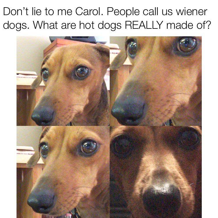Dachshund Dog Memes Dog Memes Pet Memes Sausage Dog Memes Funny