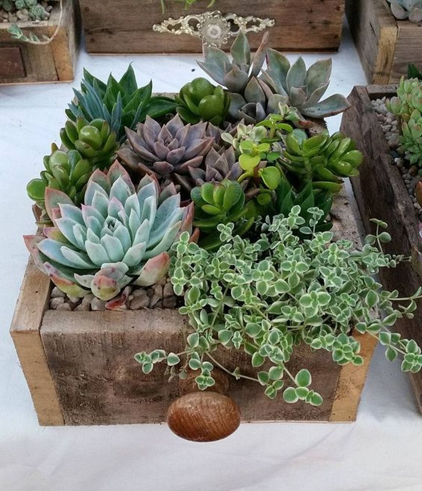 ciao! newport beach | Planters, Rock and Succulent containers